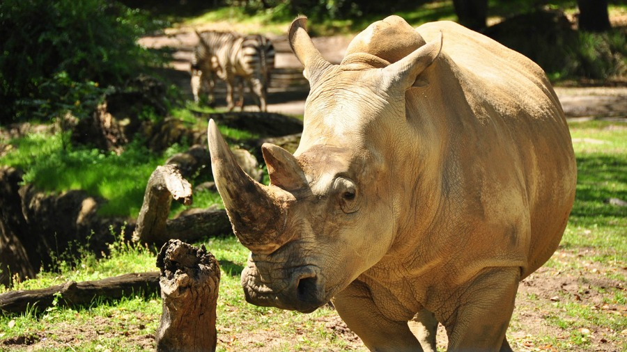 rhino301