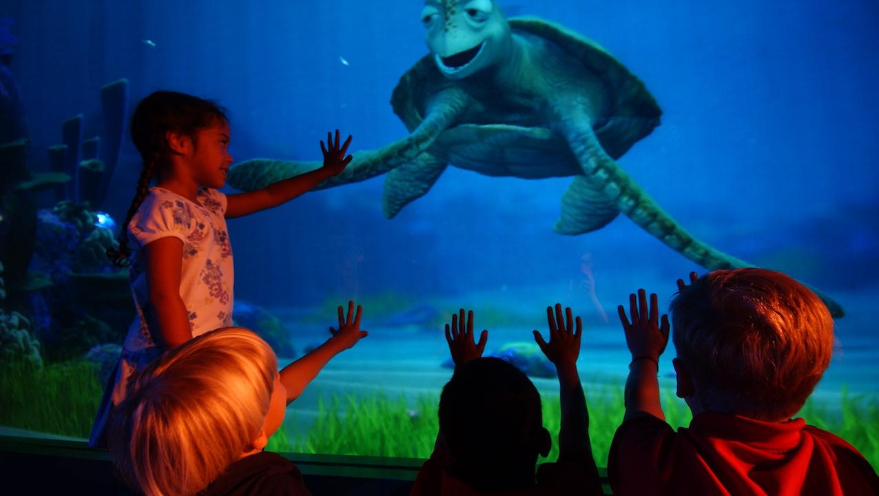 turtle talk with crush